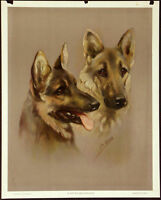 GERMAN SHEPHERD GSD ALSATIAN DOG FINE ART PRINT Antique Print - by Mabel Gear