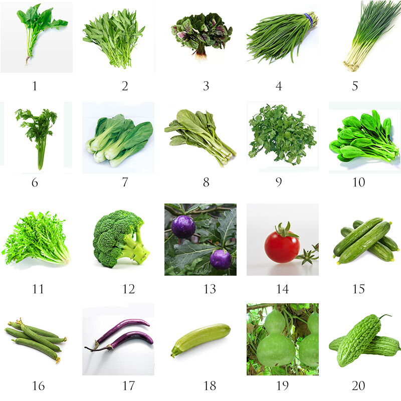 New Heirloom Home Garden Vegetable Seeds Non Gmo Seeds Organic Plant Ebay