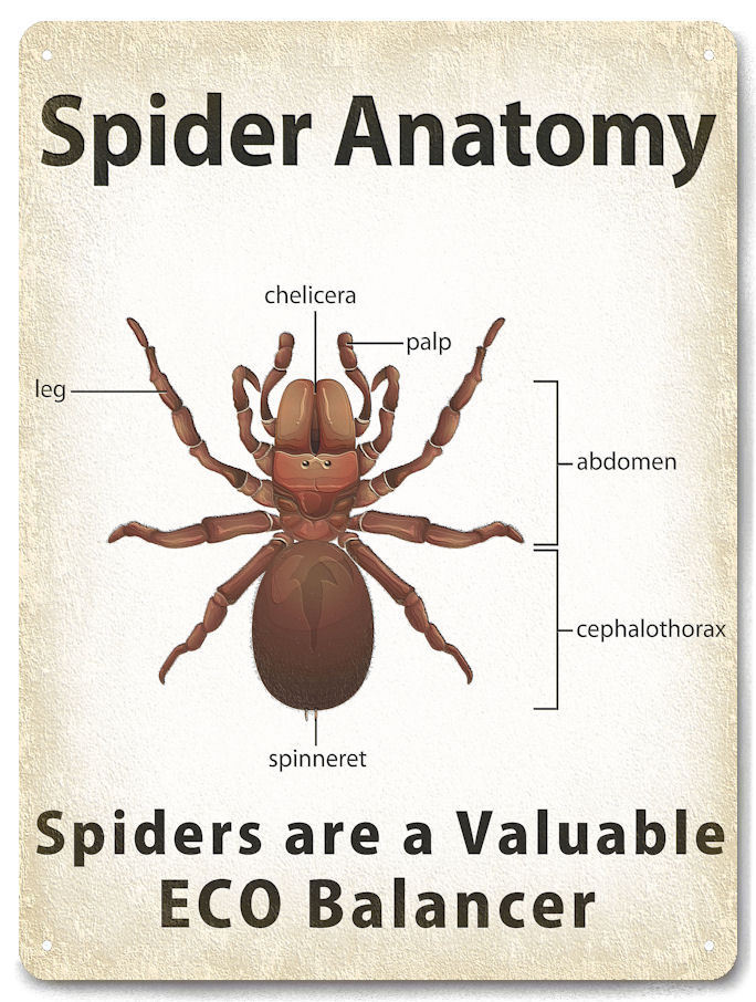 Spider Anatomy Metal Sign educational class room kids funny gift ...