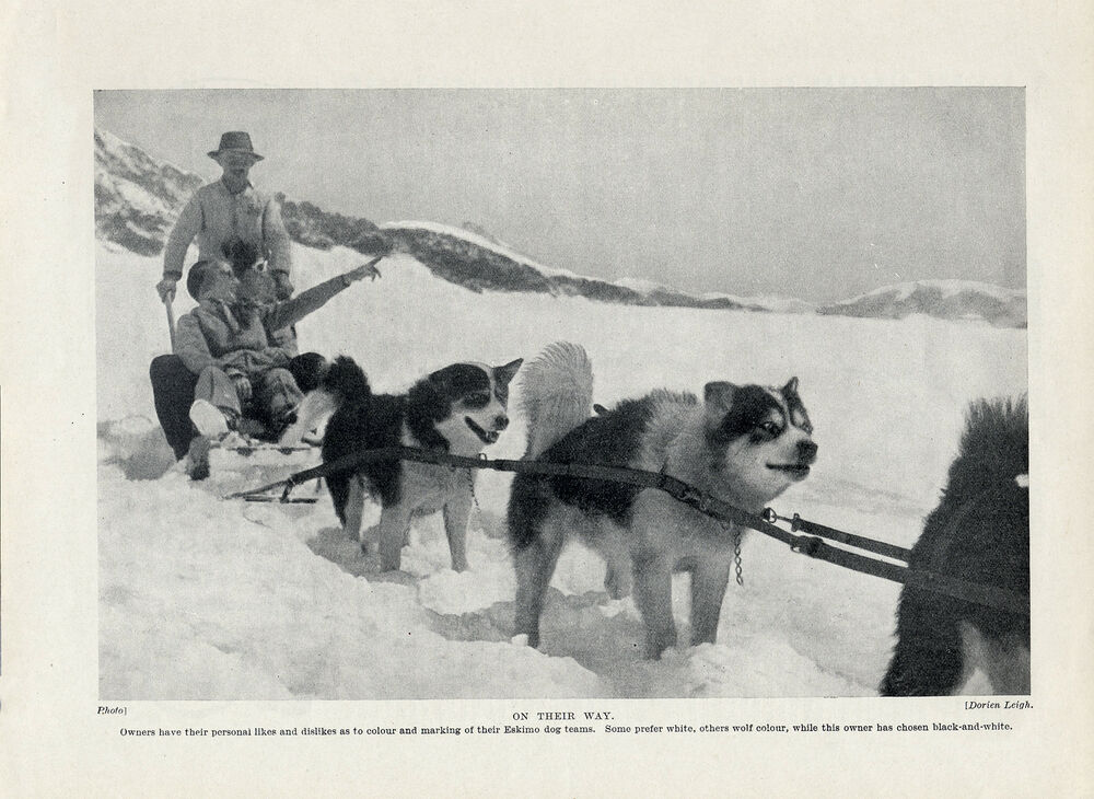 buck s development as a sled dog The hero of jack london's the call of the wild (1903) is buck, a st bernard/scotch shepherd dog late one night in 1897, a poor farm-worker steals buck from his comfortable northern california home and sells him as a sled dog.