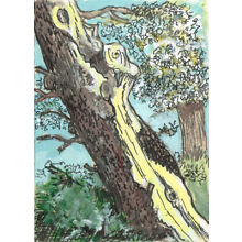 Original ACEO pen and ink/watercolor drawing of a tree in a landscape