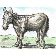 Original ACEO pen and ink/watercolor drawing after an etching of a Donkey