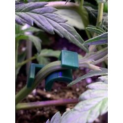 Low Stress Training (LST) and Plant Training, This is for 40 clips