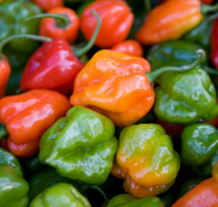 HABANERO PEPPERS---HOT!!!!! and so Beautiful!!!! Fun to ...