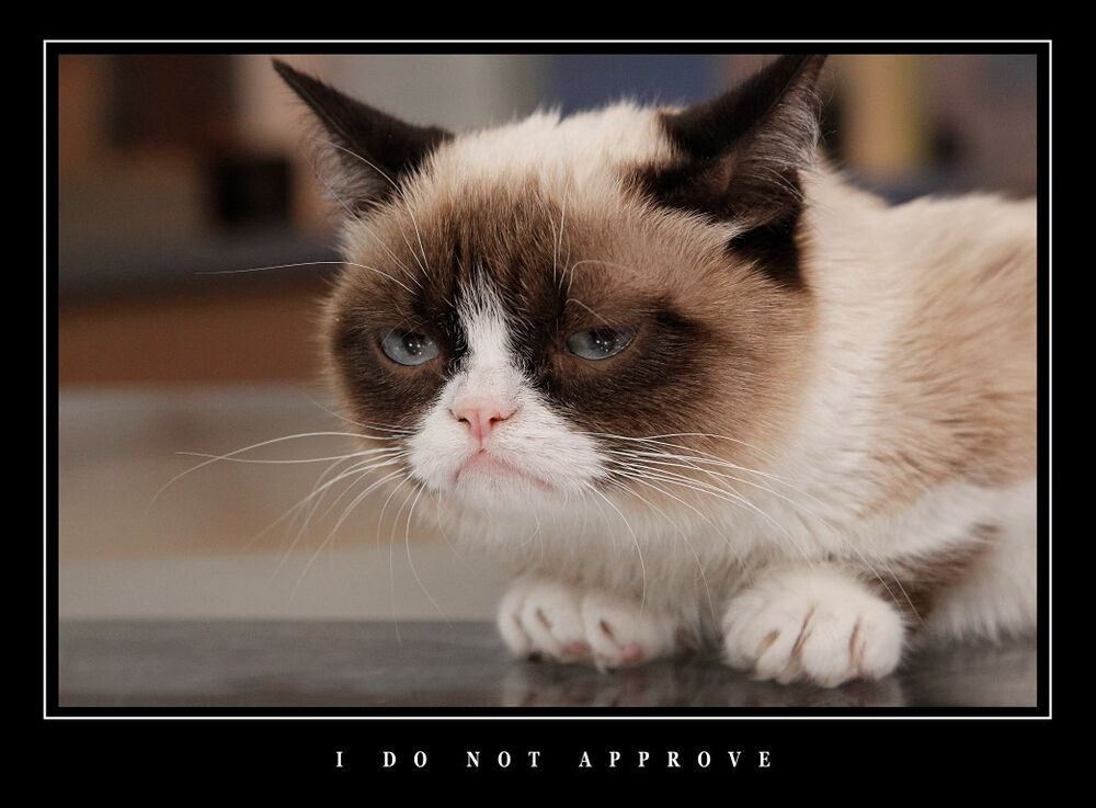 LARGE FUNNY DEMOTIVATIONAL GRUMPY CAT LARGE WALL ART PHOTO ...