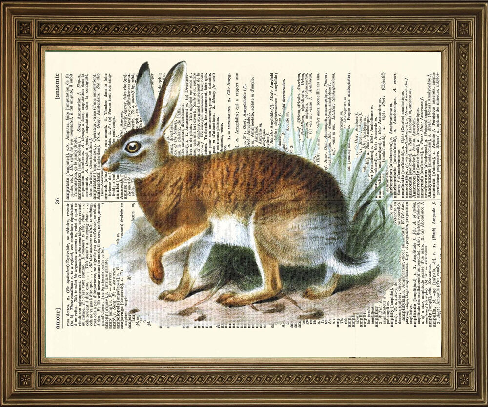 "Details about   VINTAGE DICTIONARY BOOK PAGE ART: Wild Brown Hare / Rabbit Vintage Print (8x10"")"