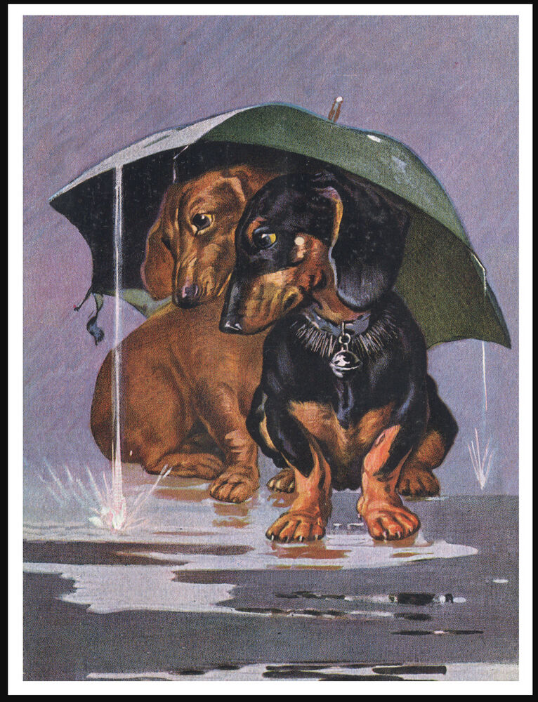 dachshund dogs sheltering from the rain charming vintage style dog print poster ebay. Black Bedroom Furniture Sets. Home Design Ideas