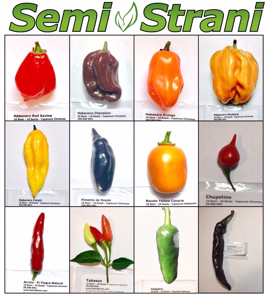 120 pure seeds hot chili peppers mexican collection for To home com