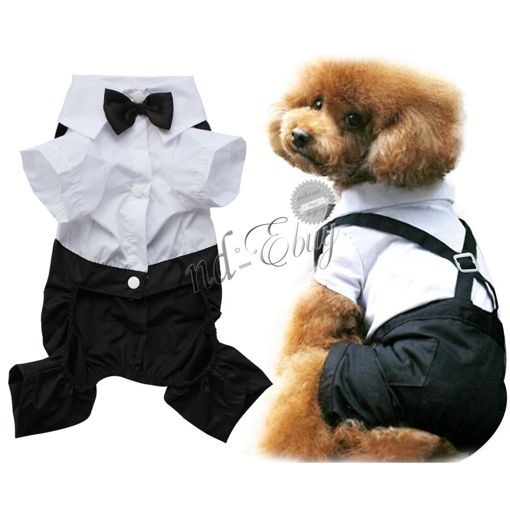 Formal Wear For Large Dogs