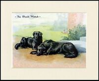 FLAT COATED RETRIEVER THE BLACK WATCH DOG PRINT MOUNTED READY TO FRAME