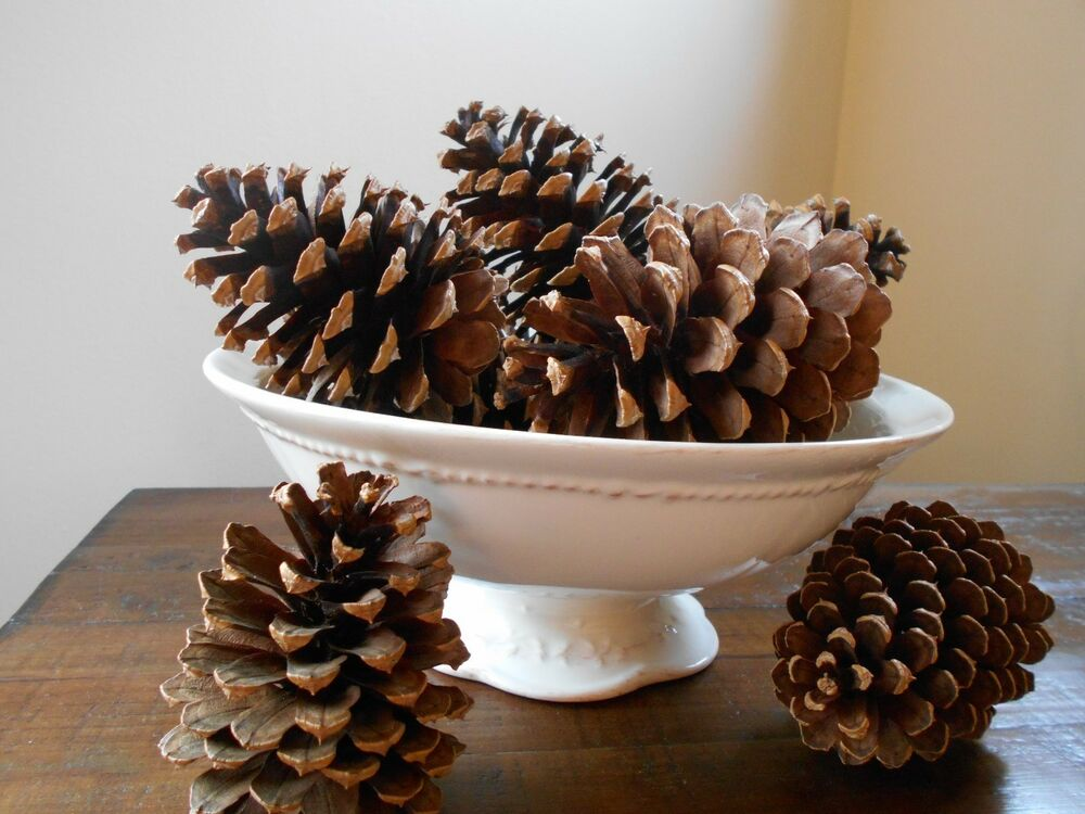 10 real pine tree pine cones for crafts rustic weddings for Long pine cones