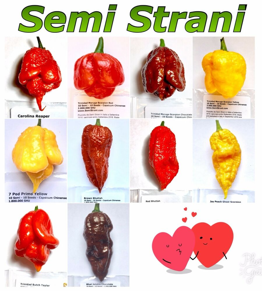 Hottest Pepper In The World List 10 Hottest Chili Peppe...