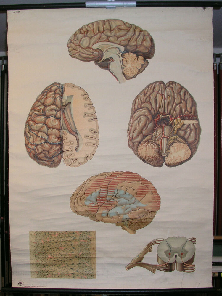 School Wall Mural Wall Picture central nervous system nervous system ...