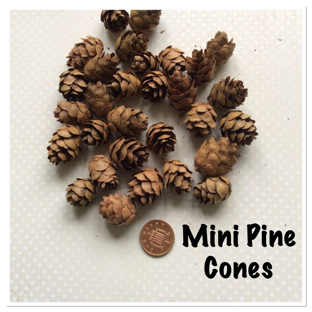 mini pine cones 30 per pack ideal for magnolia craft