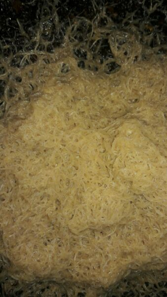 White worm Starter culture  Organic fish/frog/newt food FREE SHIPPING!