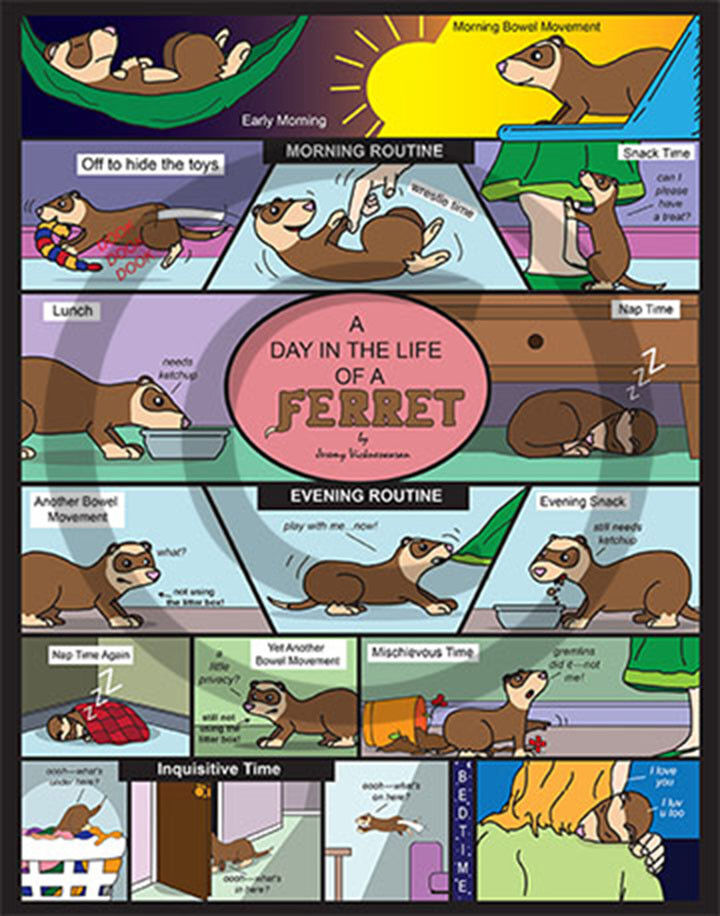 A Day In The Life Of A Ferret Poster Ebay