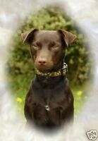Patterdale Terrier A6 Blank Card No 8 By Starprint