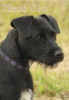 Patterdale Terrier Thank You Card By Starprint - No 1