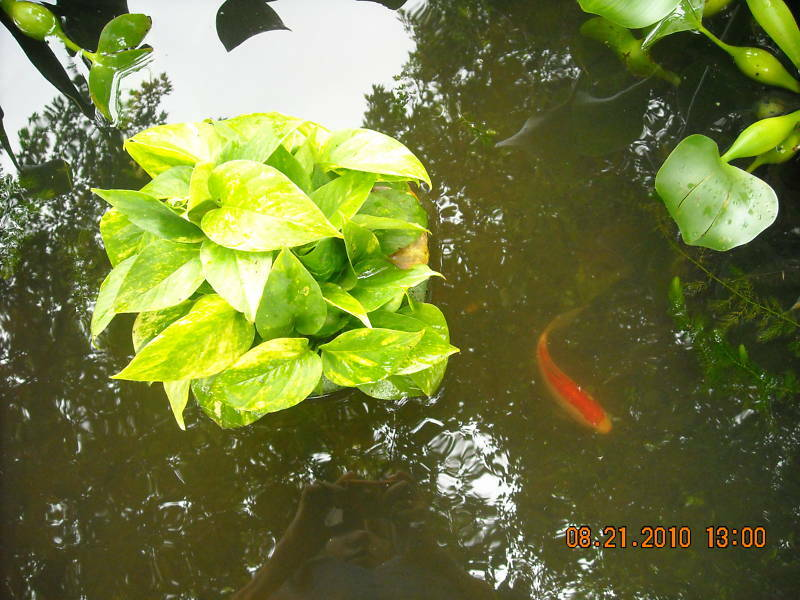 8 inch floating basket for pond plants w anchor string ebay for Floating pond plants