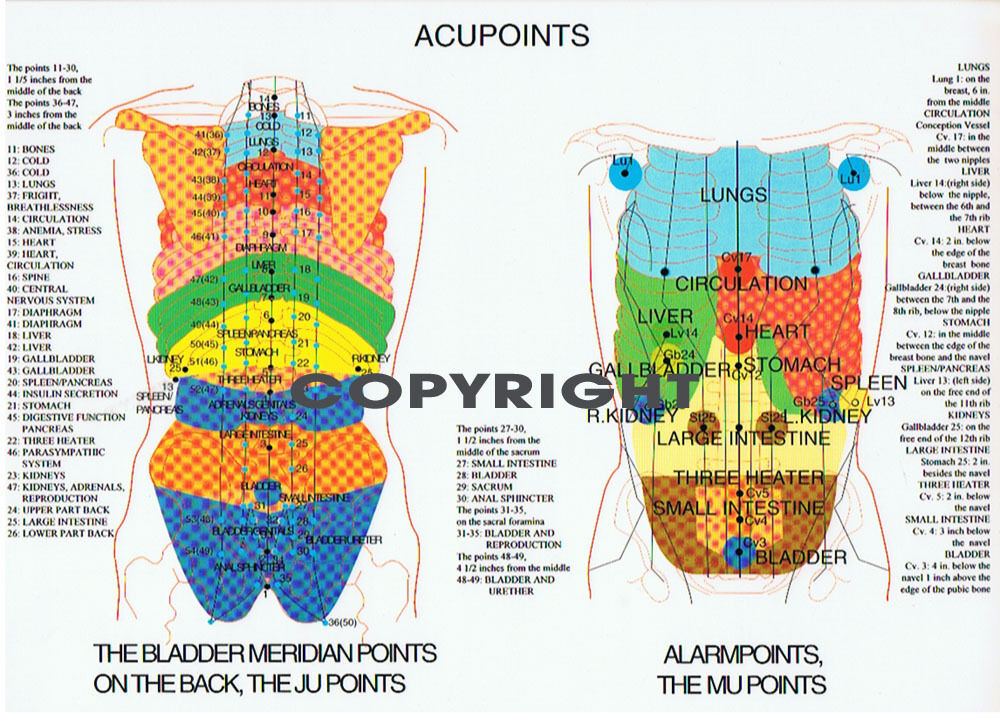 ACUPOINTS CHART ..... A4 ....... NEW | eBay