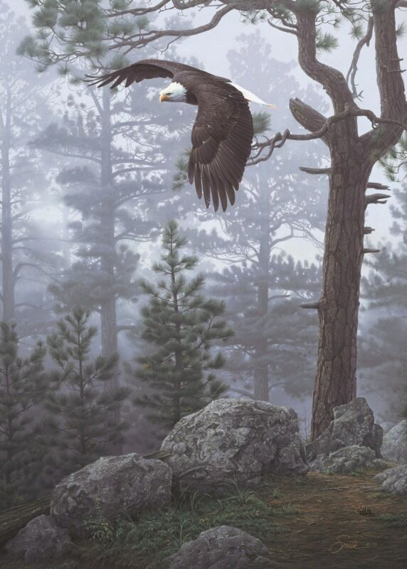The Detail Shop >> EAGLE ART PRINT - Shrouded Forest (detail) by Daniel Smith ...