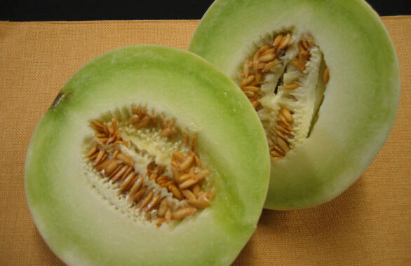 Cantaloupe seed honey dew melon seed fresh seed free for Gardening 3rd trimester