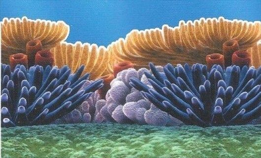 Nemo large prepasted under the sea coral wallpaper border ds026407 ebay - Sea coral wallpaper ...