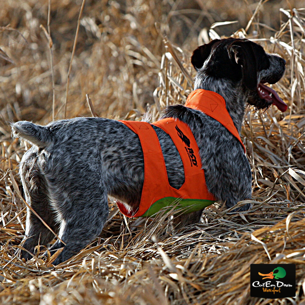 Best Dog Vest For Upland Hunting
