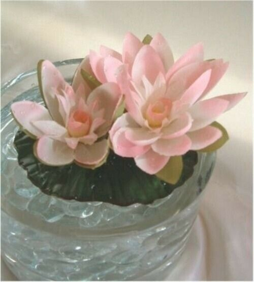 Floating water lily cream pink pond fountain plant wedding for Floating flowers in water