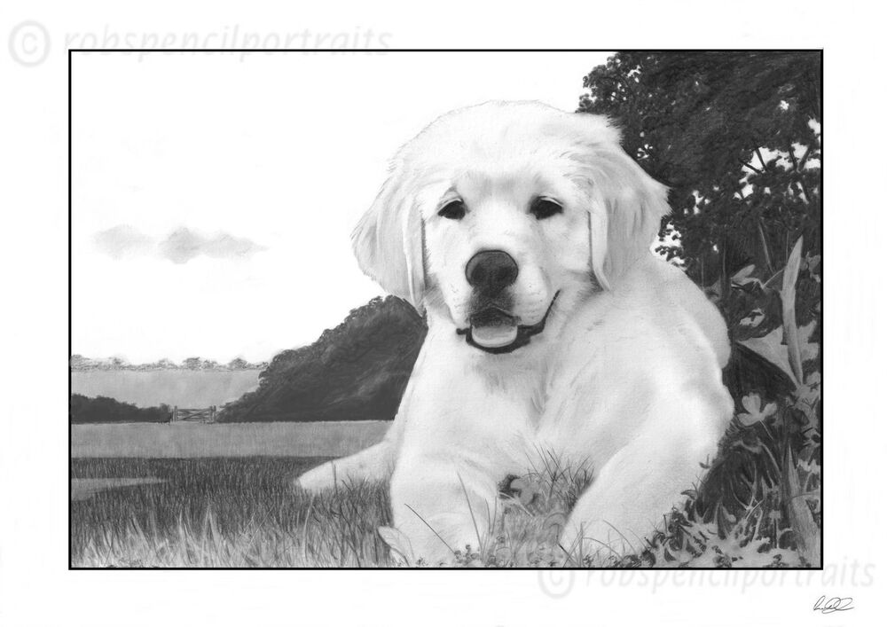 golden retriever puppy pencil drawing print great gift present for dog lover ebay. Black Bedroom Furniture Sets. Home Design Ideas
