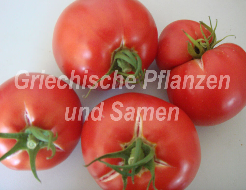griechische fleisch tomate 10 samen tolles aroma rekordertr ge tomaten tomate ebay. Black Bedroom Furniture Sets. Home Design Ideas