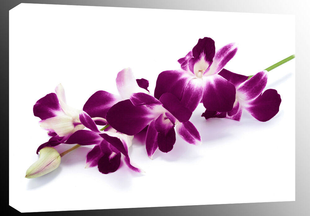 Finest Extra Large Plum Purple Orchids on White Box Canvas Floral Wall  FG32