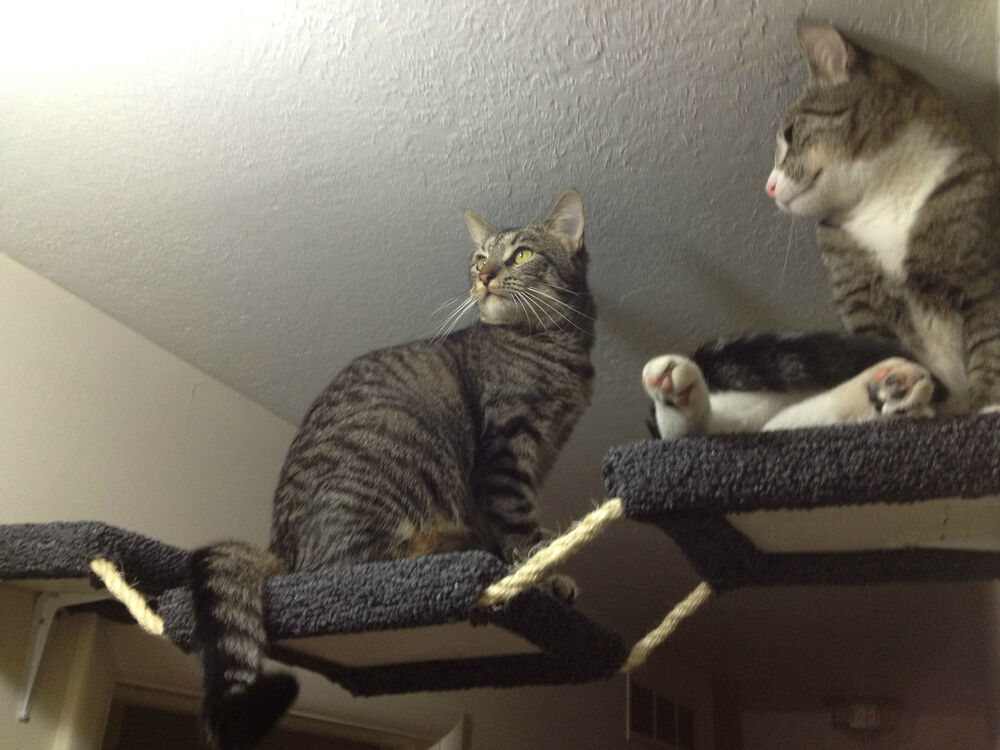 Carpeted Cat Hallway Rope Bridge For Shelves Ebay