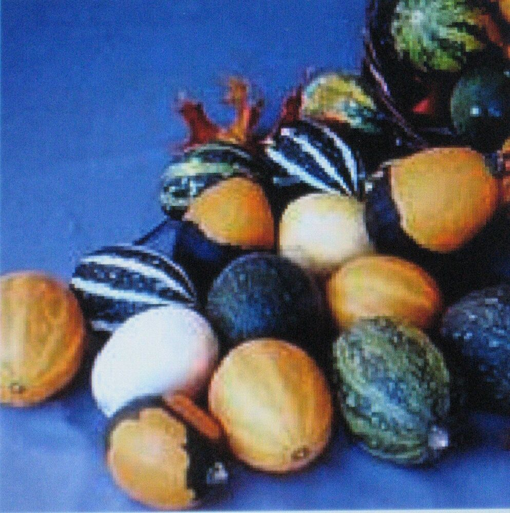 Gourds seeds large small mix fun for kids arts for Where to buy gourds for crafts