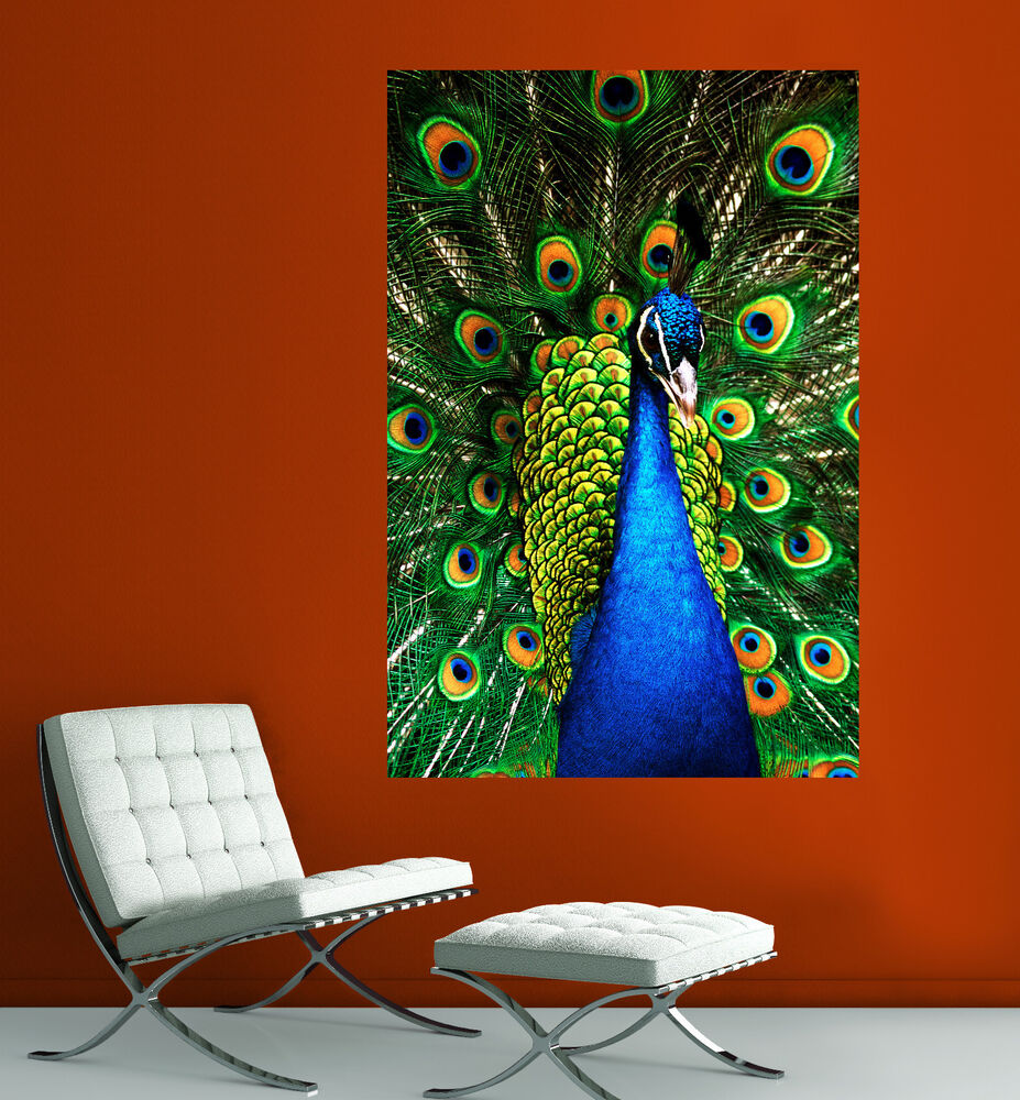 Canvas giclee prints wall art peacock photo colorful print for Prints for home decor