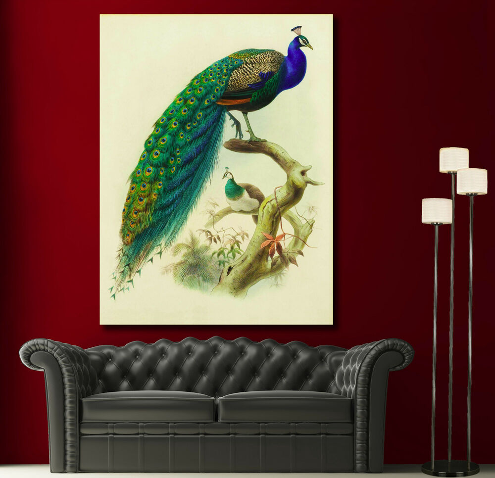 Canvas giclee prints wall art peacock feather colorful for Peacock wall art