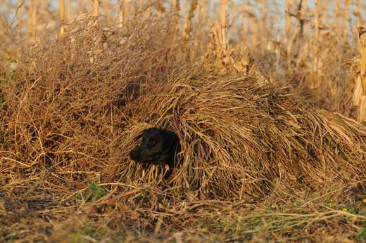 Ghg Ground Force Dog Blind Ghillie Cover All Terrrain Ebay
