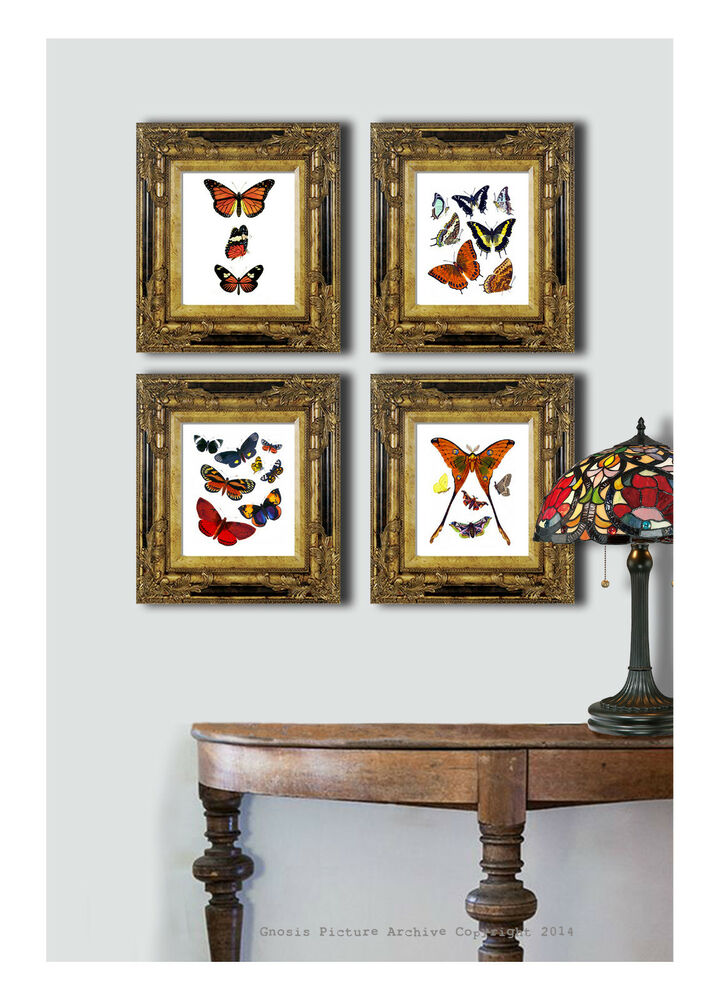 Set of 4 antique butterfly prints home interior decor for Interior wall art