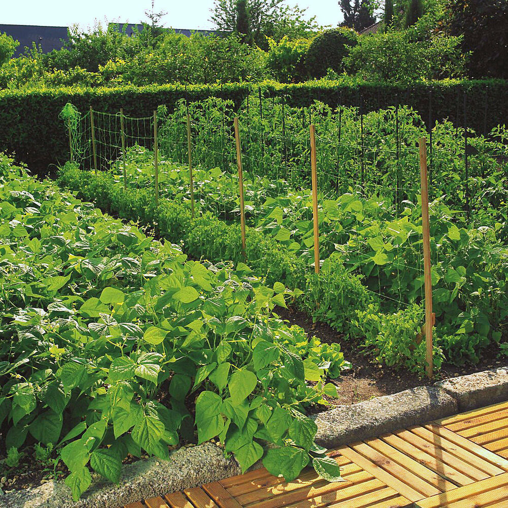 pea bean climbing plant trellis support nets netting fence 2m high x 10m 25m ebay. Black Bedroom Furniture Sets. Home Design Ideas