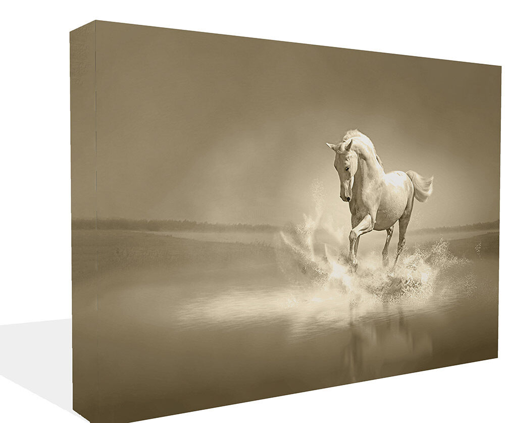 Wall art horse pictures : Animal large white horse running canvas print wall art