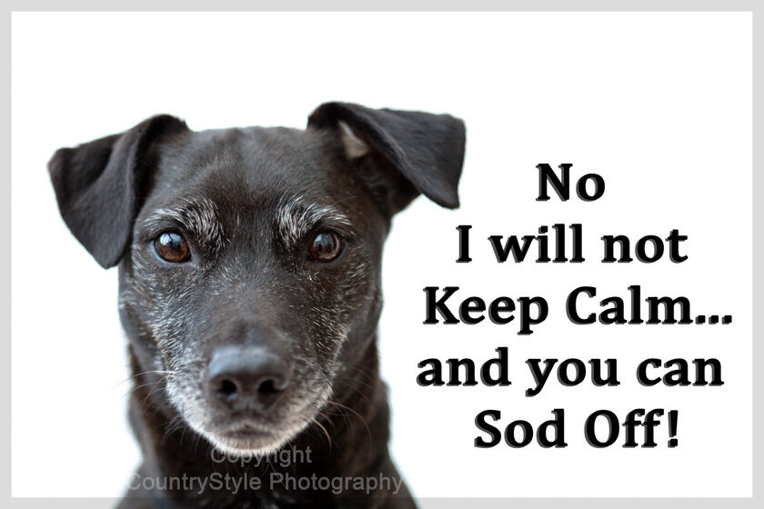 Patterdale Terrier Dog Funny Fridge Magnet New Keep Calm