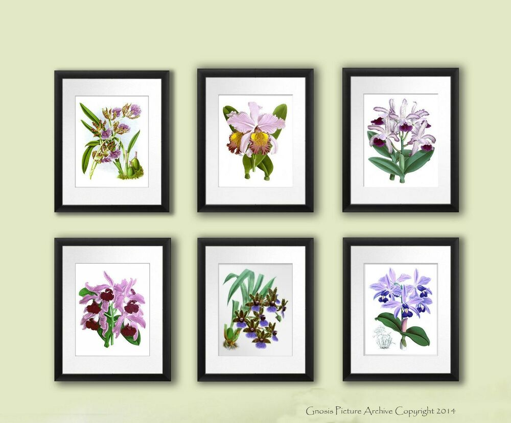 Set of 6 Purple Orchid Prints Antique Botanical Book Plate ...