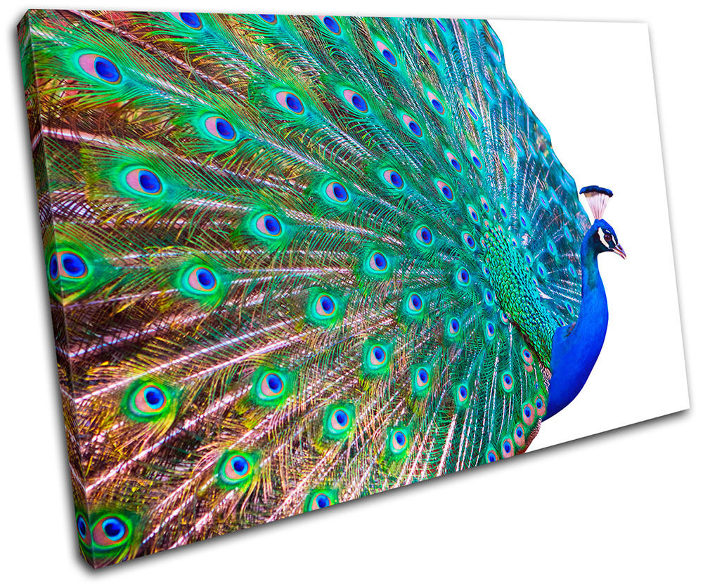 Peacock feathers animals single canvas wall art picture for Peacock wall art
