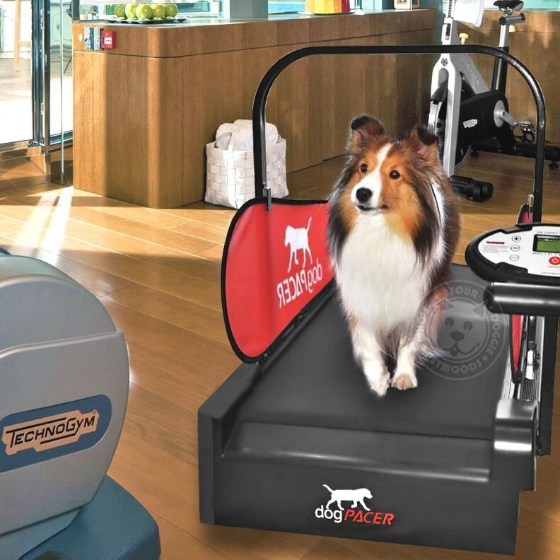 Dogpacer Dog Mini Treadmill Minipacer Folds Portable Small