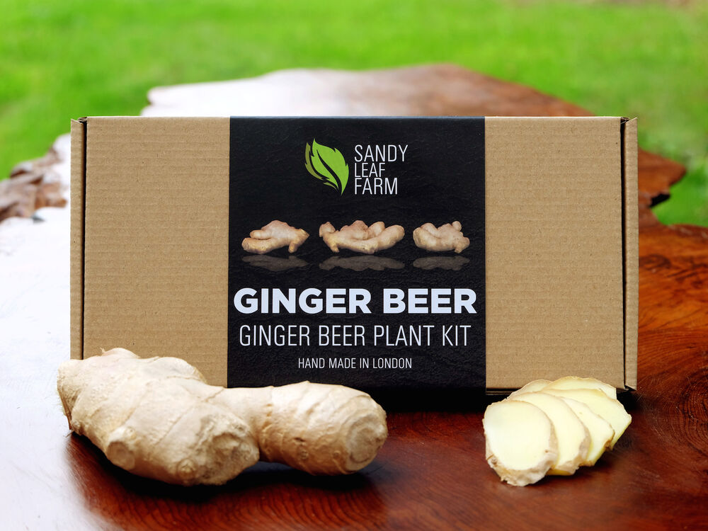 Ginger Beer Plant Kit *FREE DELIVERY* - Make your own alcoholic ginger ...