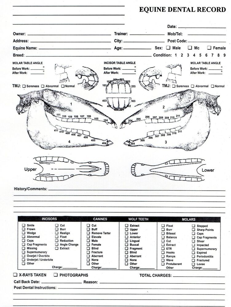 Equine Dental Chart for Equine Dentistry and Veterinary ...