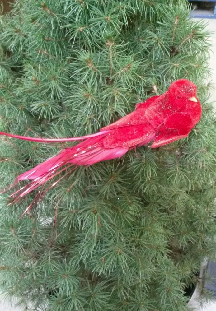 12 red birds real feathers wedding crafts for Where to buy craft feathers