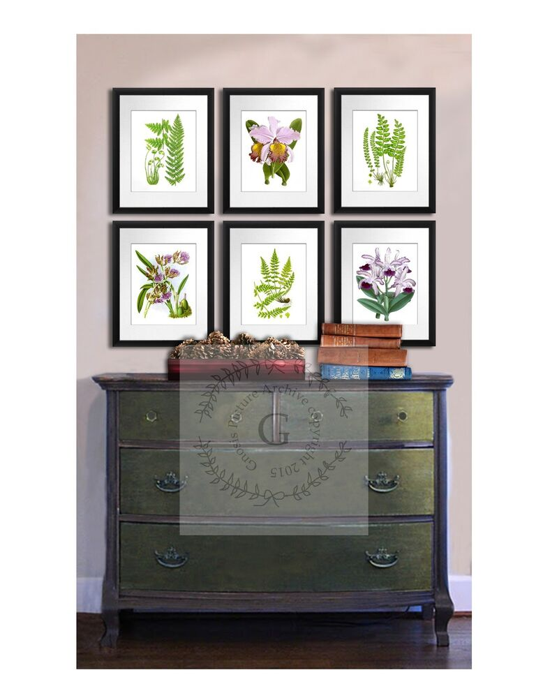 Set of botanical prints ferns orchids set of 6 living room for Wall art sets for living room