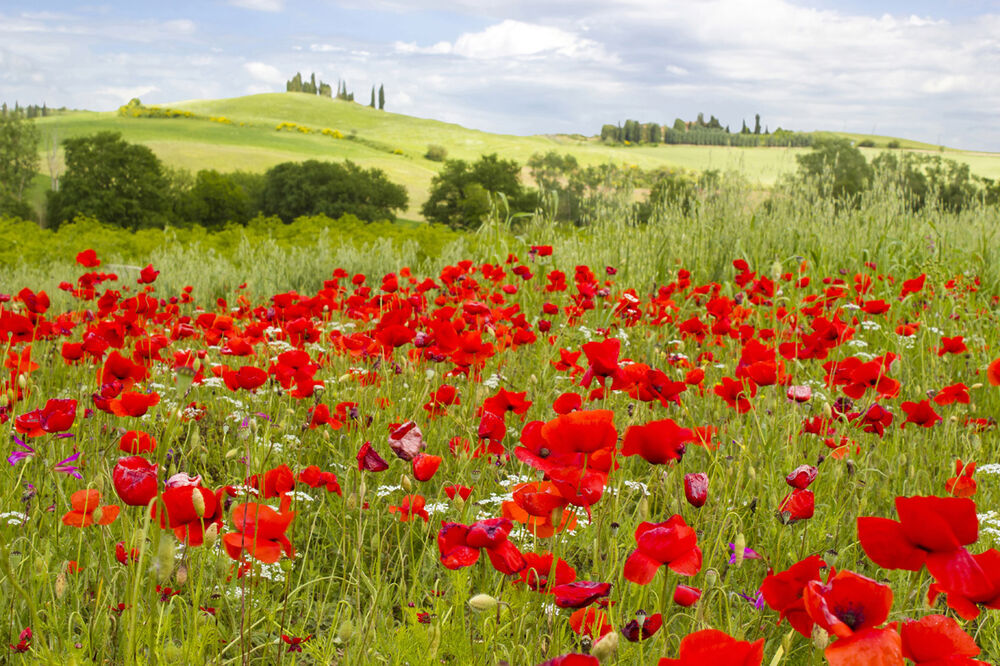 Self Adhesive Wall Mural Photo Print Nature Poppy Field Peel And Stick ...