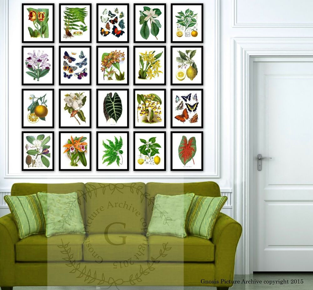 Tropical Wall Decor Botanical Art Prints Set Of 20 Living